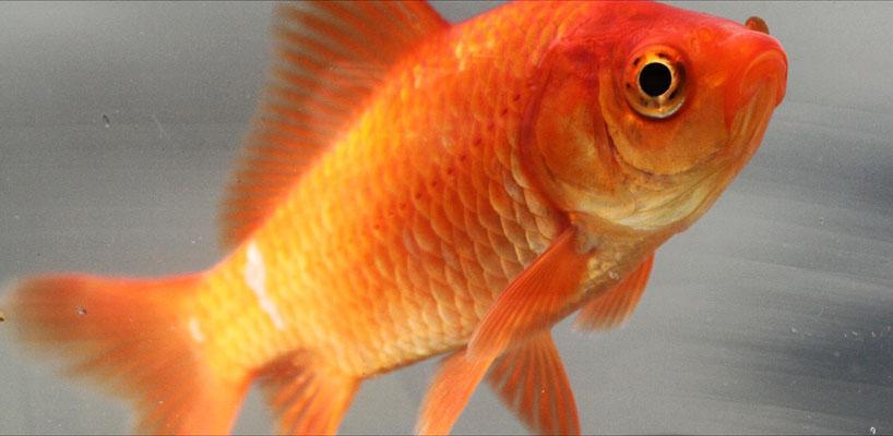 Slow Motion & Goldfish